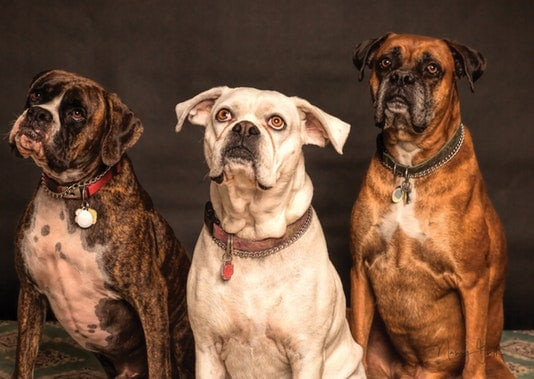 dogs-photo-850602